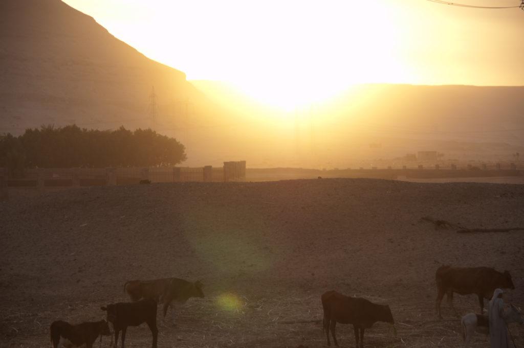 De Workshopsite - Ervaar de energie v. flow & eenheid uit het oude Egypte