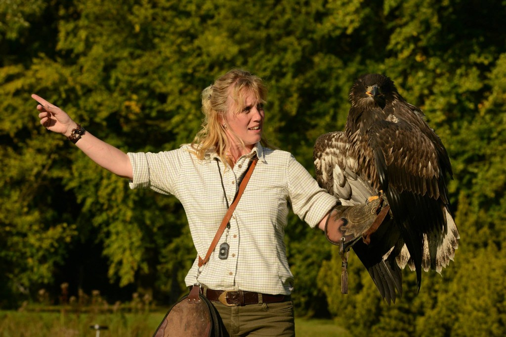 De Workshopsite - Roofvogel workshop Falconry Experience